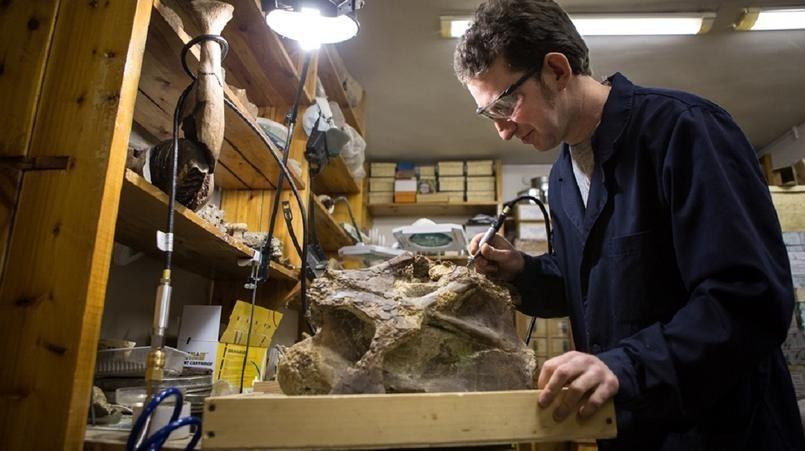 История открытия Шестаковских динозавров