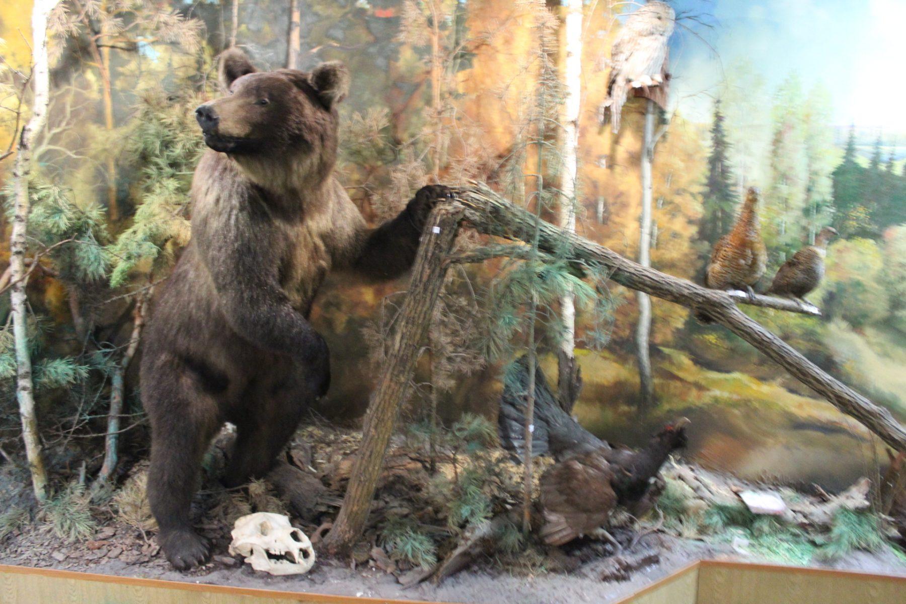 Экспозиция «Флора и фауна Чебулинского округа»